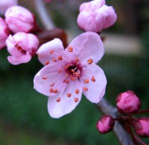 NAET behandeling allergie bloem
