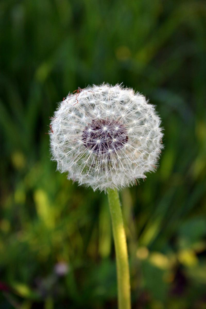 NAET behandeling allergie zonnebloem